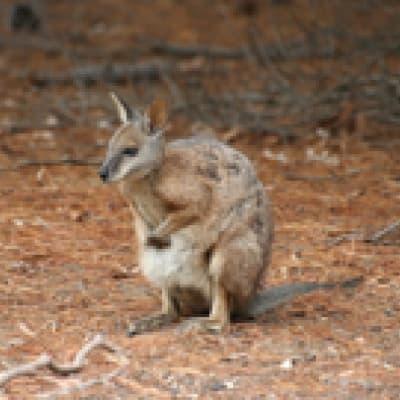 2 jours/1 nuit de safari sur Kangaroo island