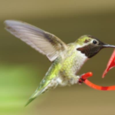 Le Parc aux oiseaux