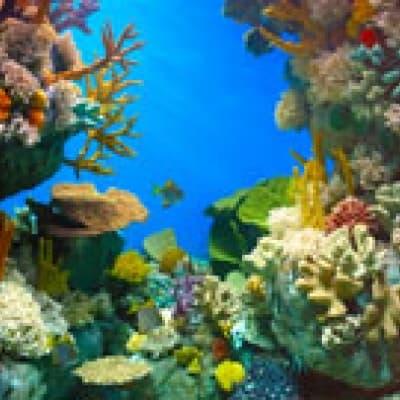 Two Oceans Aquarium au Cap