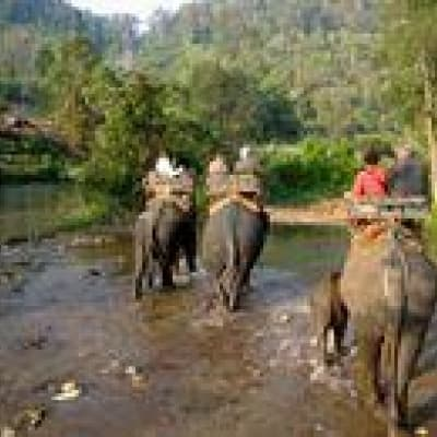Balade à dos d'éléphant à la porte sud Angkor Thom