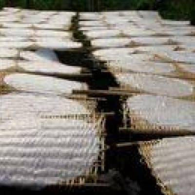 Découverte de la fabrication de galettes de riz