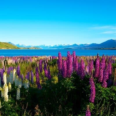 Balade autour du lac Tekapo