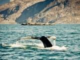 baleine quebec