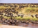 Combiné - Kenya, Tanzanie - Safaris légendaires
