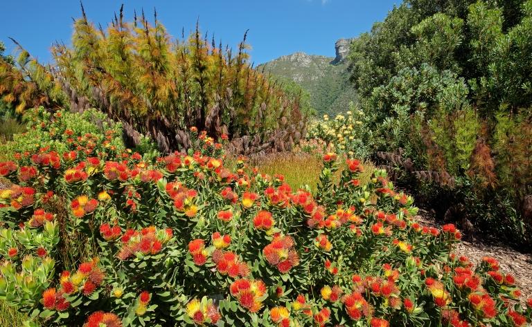 Route des vins ou visite libre de Cape Town