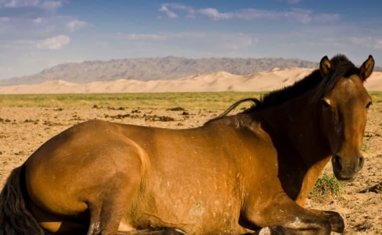 Capture de cheval avec Urga