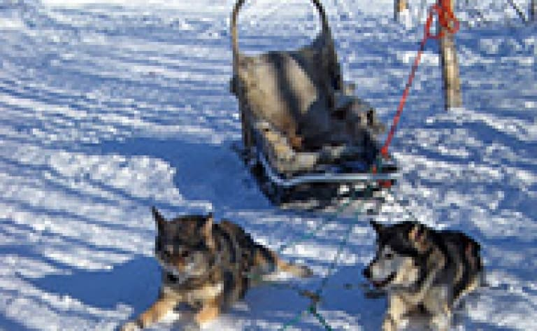 Demi-journée de traîneau à chien à Kulusuk