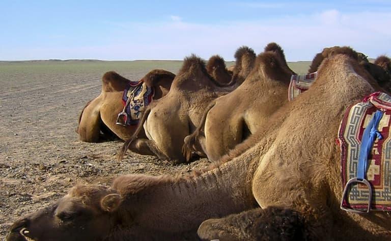 Excursion à chameau