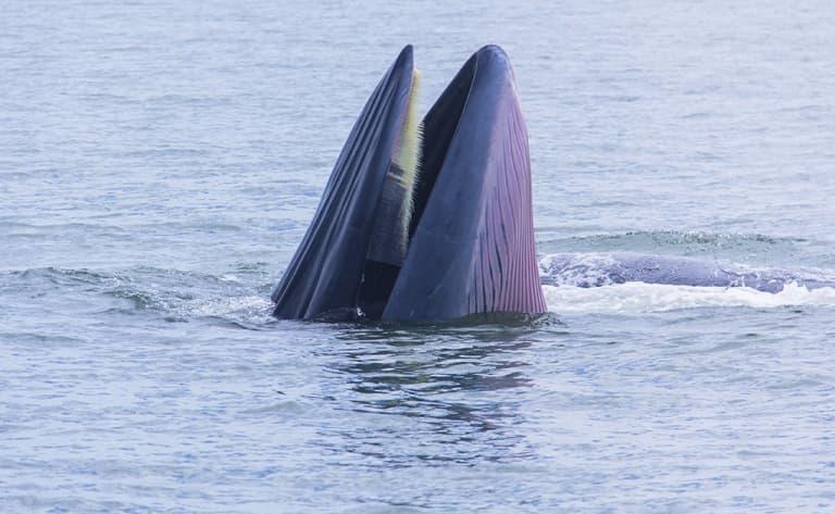 Observation des baleines à Bahia Magdalena