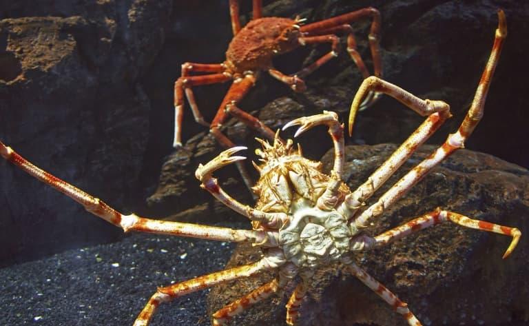 Pêche aux crabes géants !