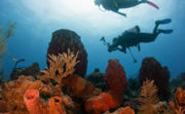 Fonds marins de Stuart Cove's