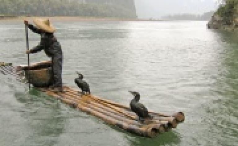 La pêche aux cormorans