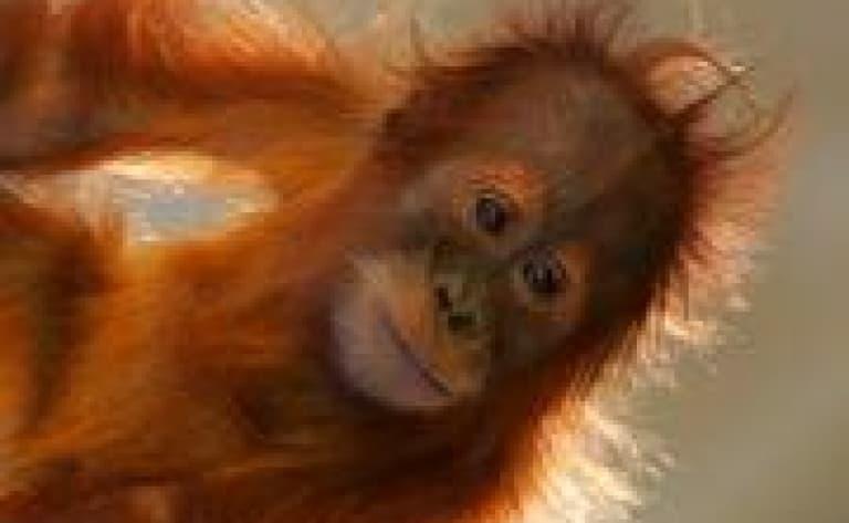 Centre de réhabilitation des orangs-outans de Sepilok