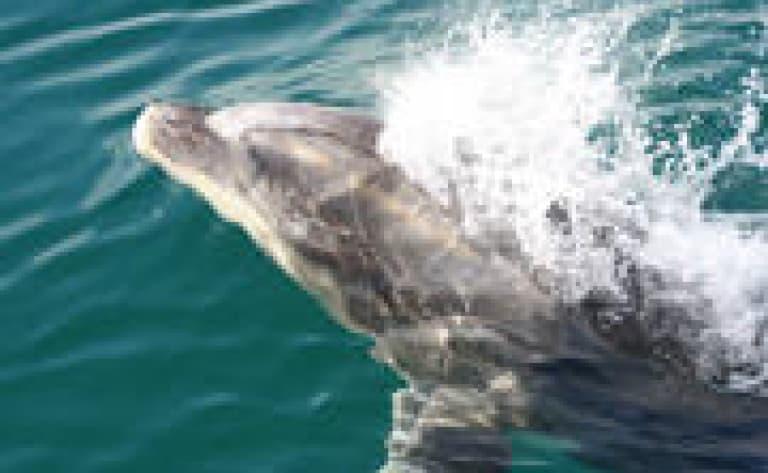 Nager avec les dauphins… (Kaikoura)