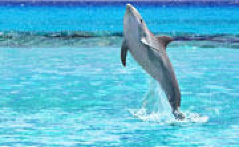 Observez des dauphins et des baleines