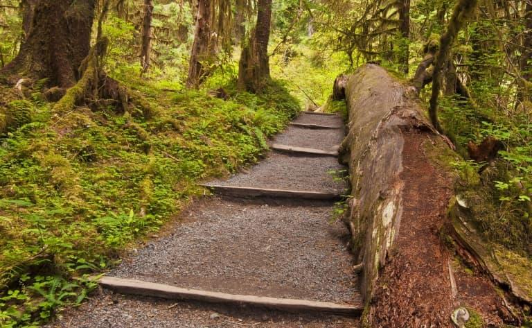 Balade dans la Hoh Rain Forest