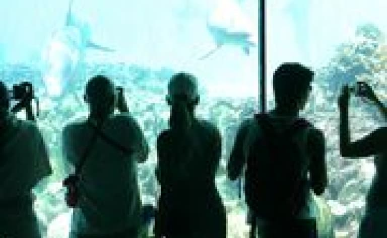 Les merveilles SeaWorld