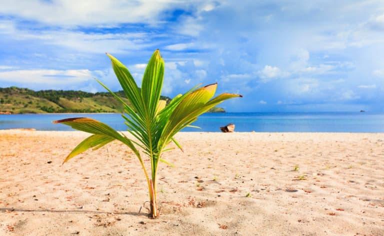 Arrivée sur l'île de Flores. Découverte du village et de la baie de Labuan Bajo