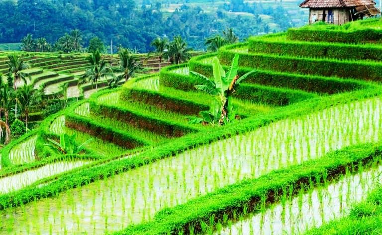 Bienvenue à Bali