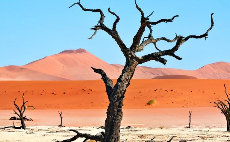 Dead Vlei…le trésor du désert du Namib !