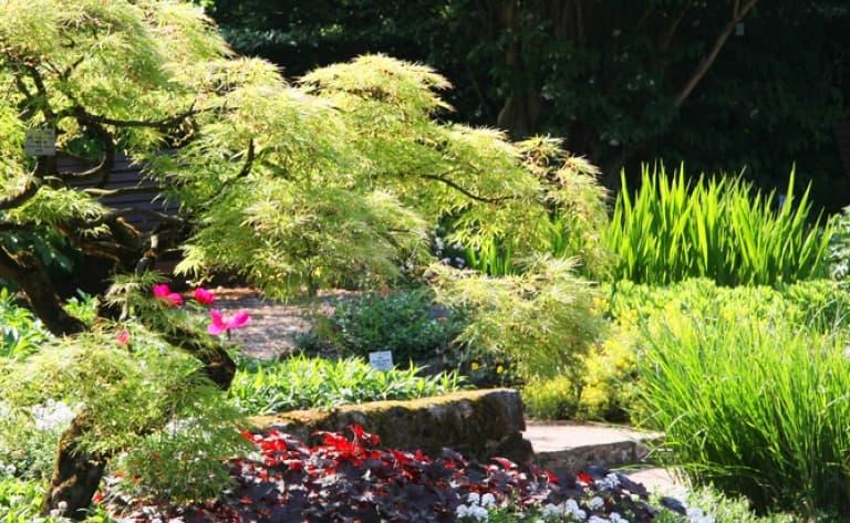 Visite du merveilleux jardin Botanique