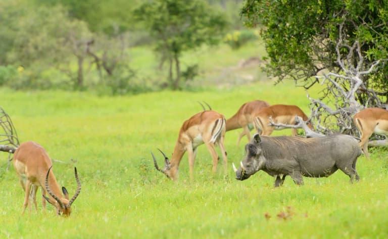 La plus grande réserve d'Afrique du Sud