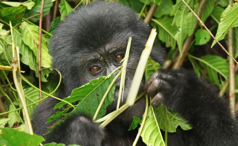 Arrivée à la forêt de Bwindi
