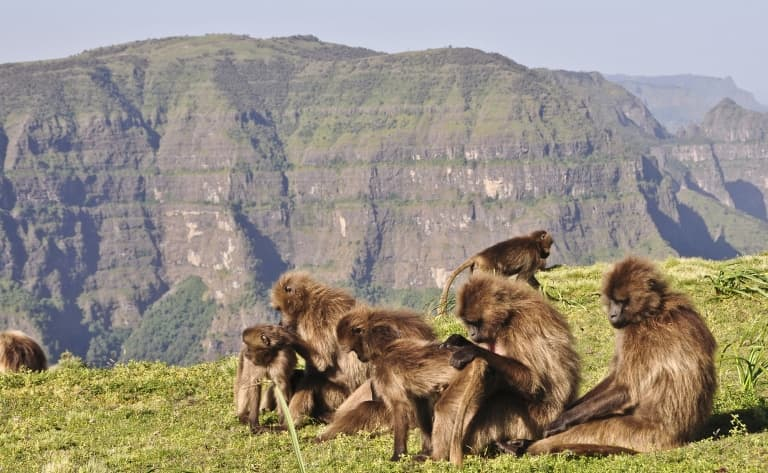 Route vers le Parc National du Simien