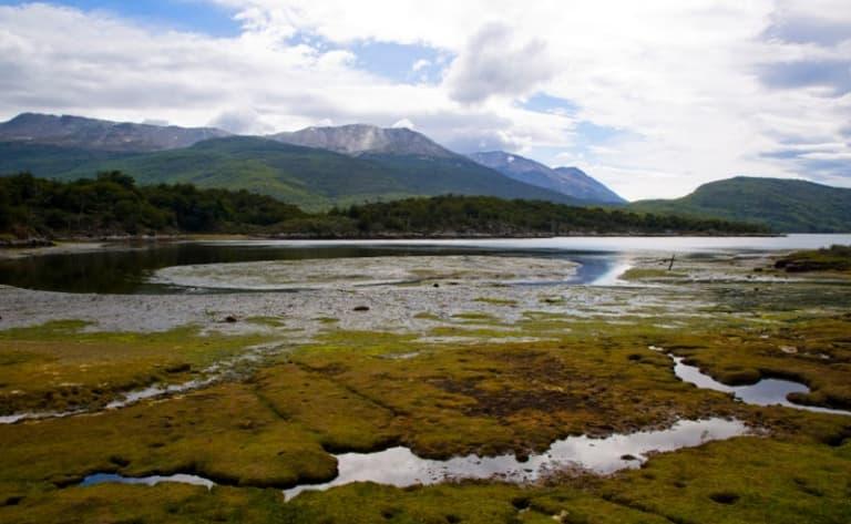 Faune de la péninsule de Valdès