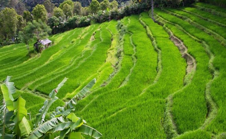 Au creux de la vallée, au bord de la rivière Muong Bo