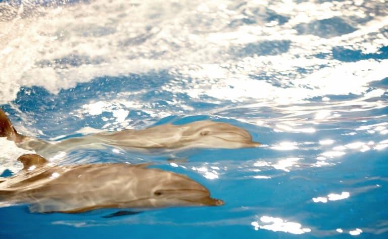 Et rencontre avec les dauphins !