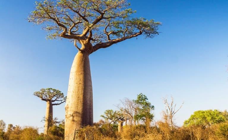 Mangroves et lagons le long du canal de Mozambique