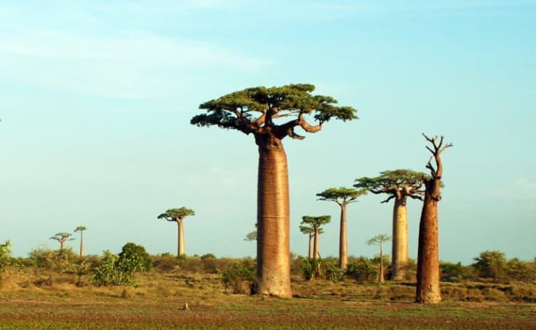 Trek et arrivée en pays Menabe