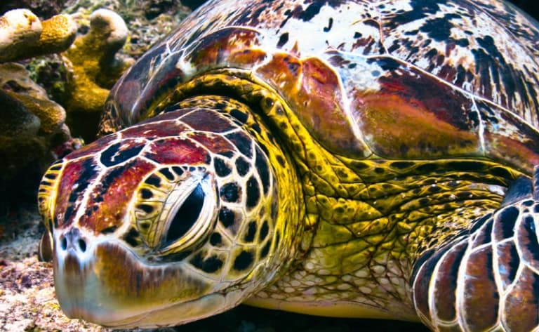 Les tortues de Turtle Island