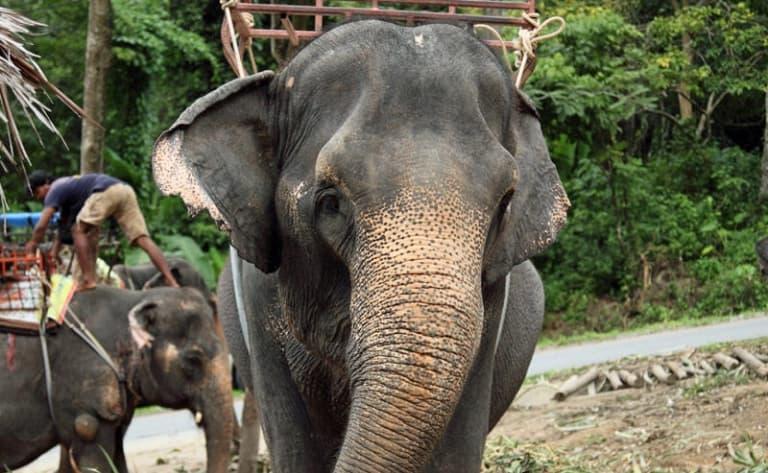 Camp d'éléphants de Green Hill Valley