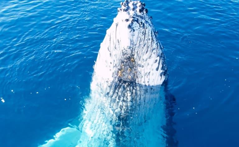 Observation des baleines et thermes
