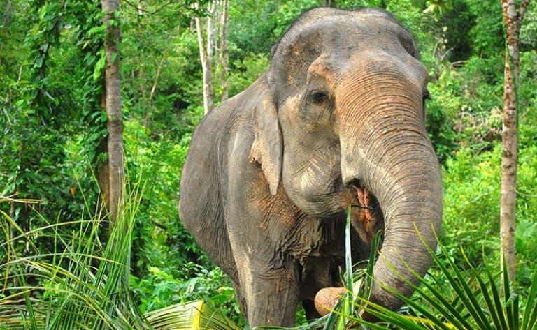Tout, vous saurez tout sur les éléphants !