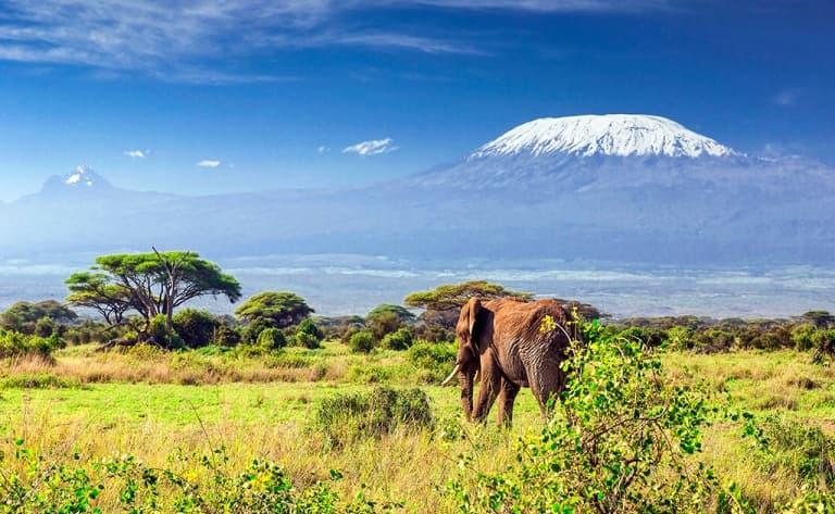 Amboseli, ou les troupeaux paissant devant le Kilimandjaro