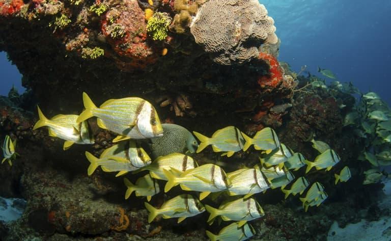 Fonds marins dans une mer translucide