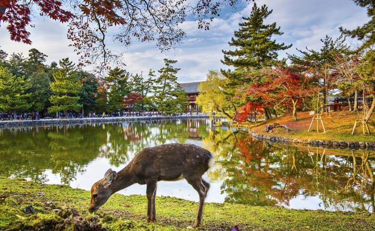 Une journée à Nara !