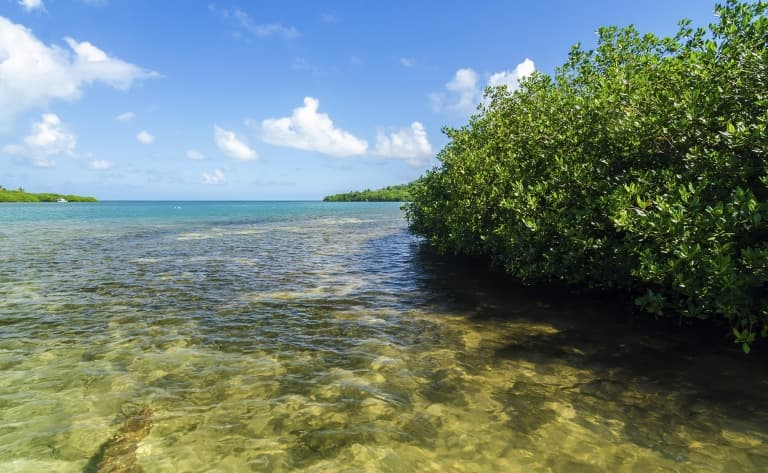 Entre les mangroves