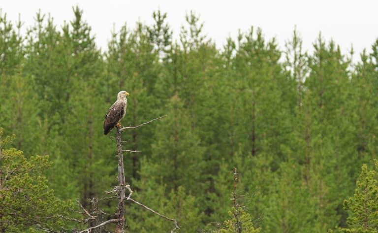 Rovaniemi, le paradis des activités !