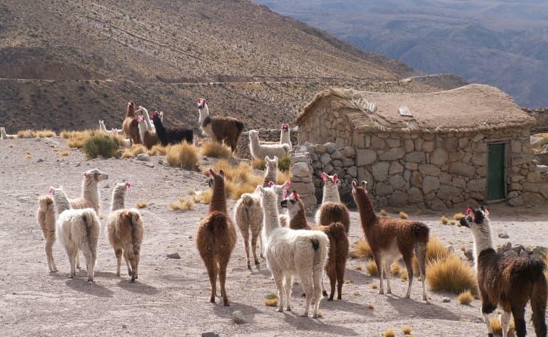 Cours de préparation des Empanadas Saltenas et visite de caves à vins