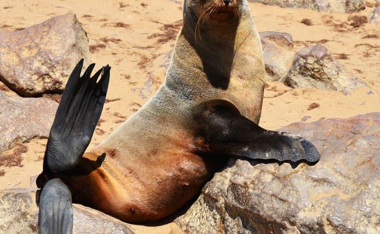 Cape Cross : dessine-moi une otarie aussi ! (425 km)