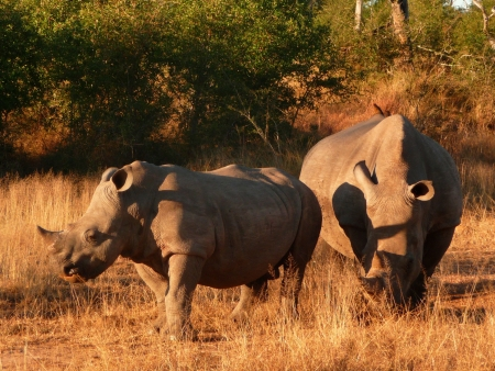 Safari au paradis des rhinocéros