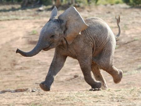 Bienvenue au royaume sauvage du Swaziland !