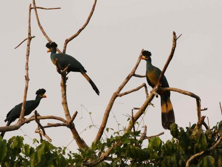 forêt primaire de Nyungwe et observation des singes colobes