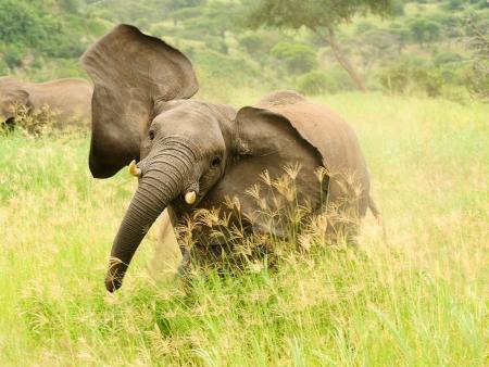 Safaris à Niassa