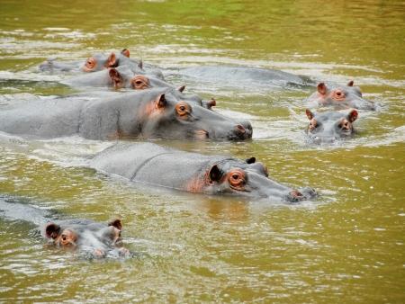 Paysages ougandais et Parc National Queen Elisabeth