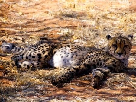 Rencontre avec les pygmées et safari au Lac Mburo